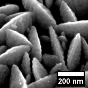 High and Low Vacuum SEM